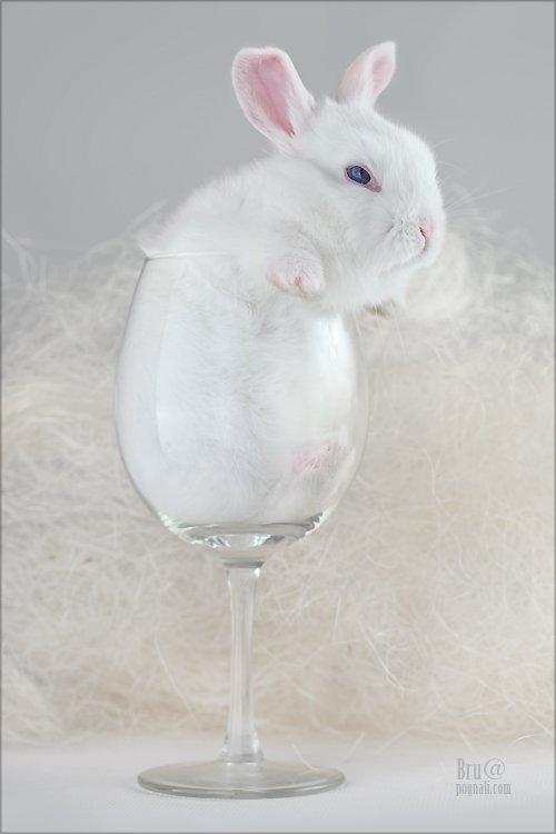 кроликбуковка, нежное чудовище, Брушша