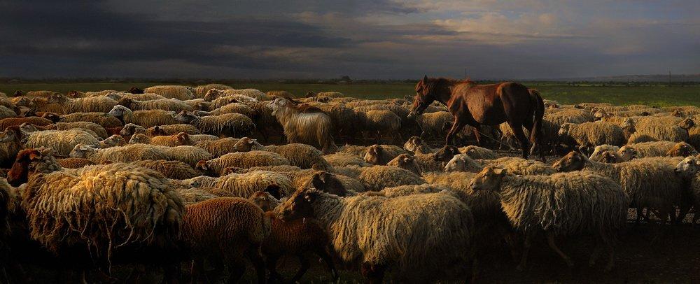 отара, азербайджан, fotomafia