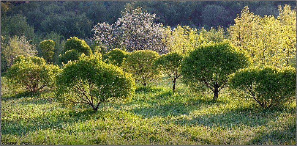 пейзаж, Андрей Житков