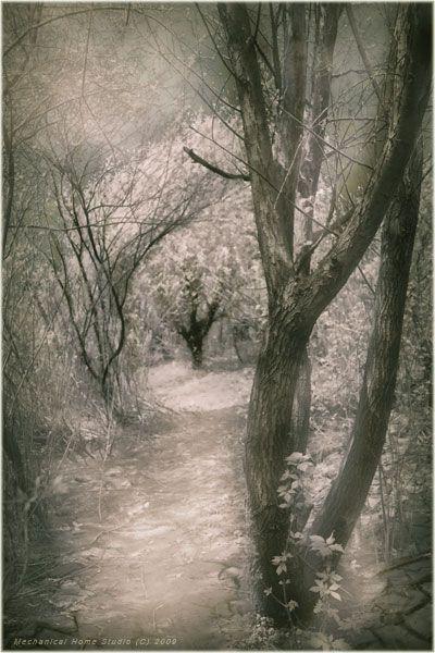 лес, тропы, ветви, Сборщик