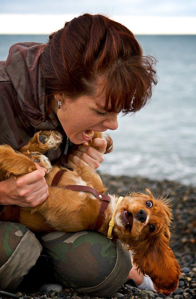 собака, море, портрет, Евгений Васенёв