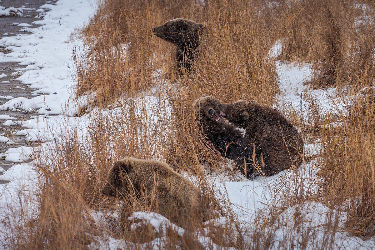 Nature, Камчатка, Курьльское озеро, Снег, Сергей Краснощёков