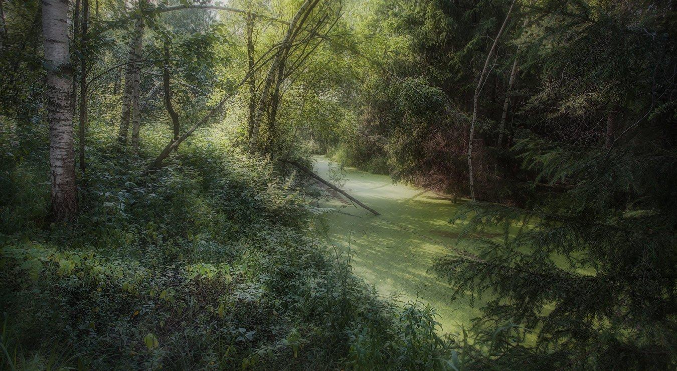 Купавна, лес, июнь, жара., Андрей Леонидович