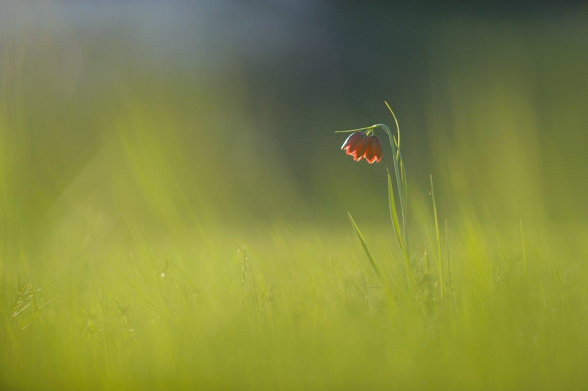 Flowers, Green, Macro, Бычков Денис