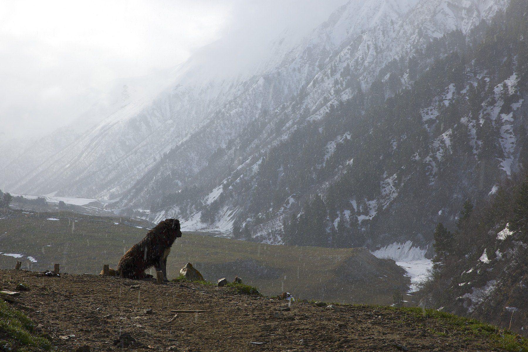 адиши-село, грузия, май, пейзаж, природа, сванети, Мазурин Евгений