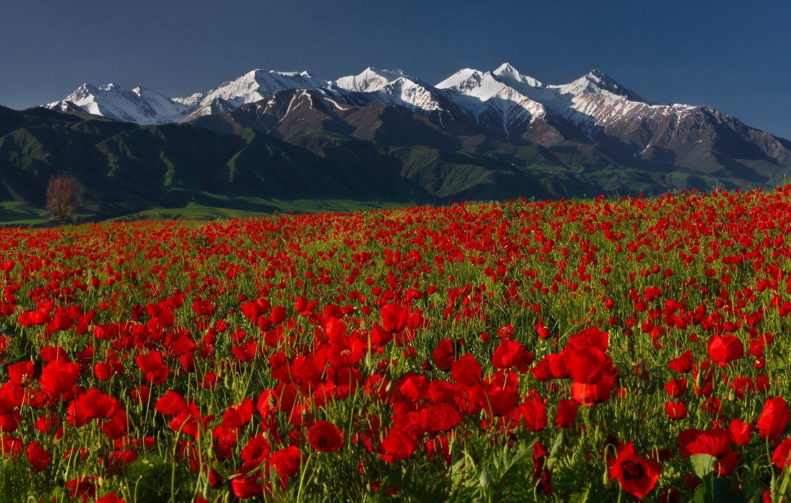киргизия, бишкек, маки, горы, t_berg, Михаил Трахтенберг ( t_berg )