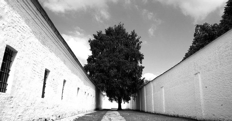 дерево, тропа, тюрьма, солнце, небо, gavroche