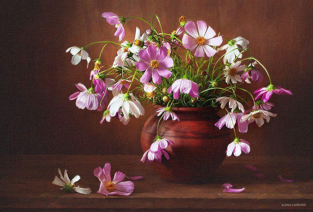 натюрморт, фотонатюрморт, космея, цветы, букет, горшок, лето, алина ланкина, Alina Lankina