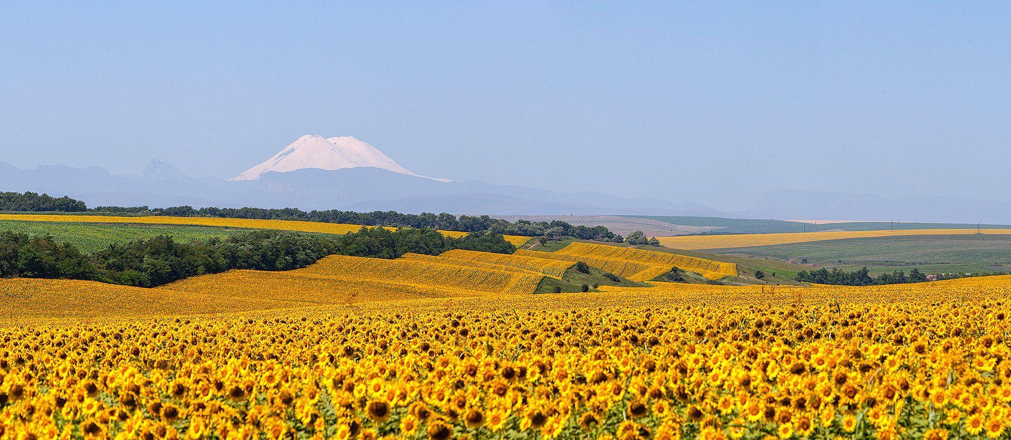 эльбрус, кавказ, sunflower, Заур Вороков