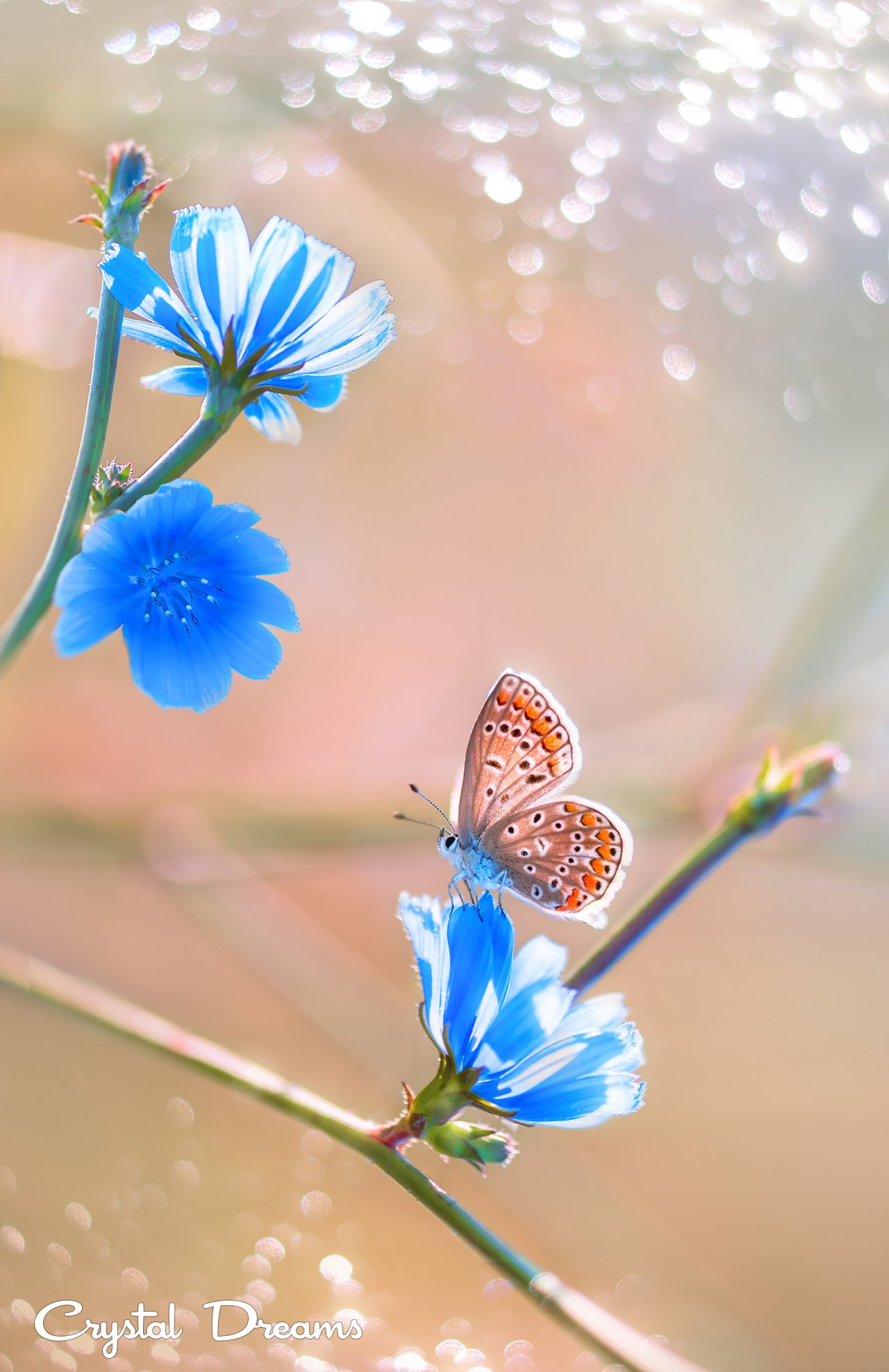 Art, Butterfly, Color, Crystal Dreams, Flowers, Light, Macro, Magic, Meadow, Morning, Nature, Крылова Татьяна