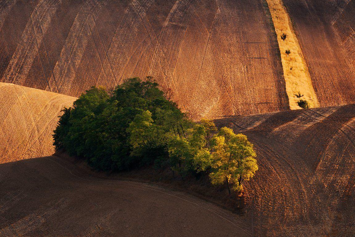 Countryside, Czech republic, Evening, Fields, Hills, Light, Rural, South moravia, Summer, Trees, Martin Rak