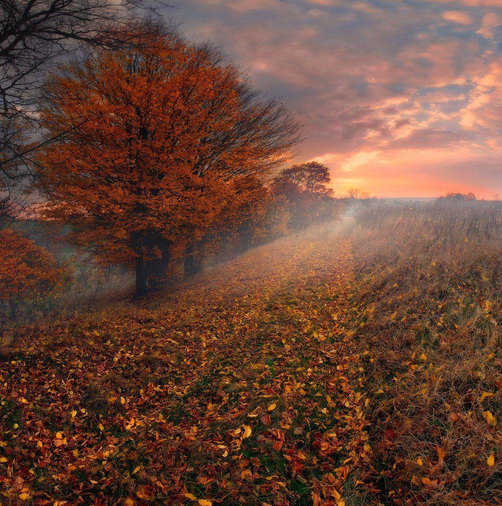 Дорога, Листопад, Осень, Рассвет, Утро, Владимир