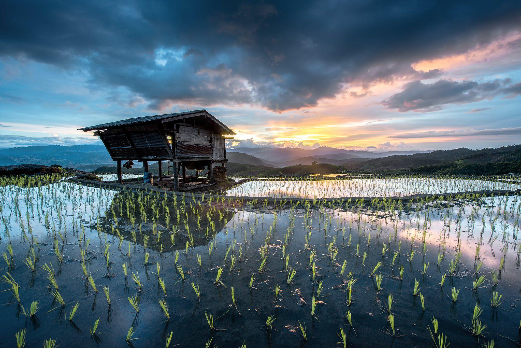 thai,rice,sky,home,refection, sarawut intarob
