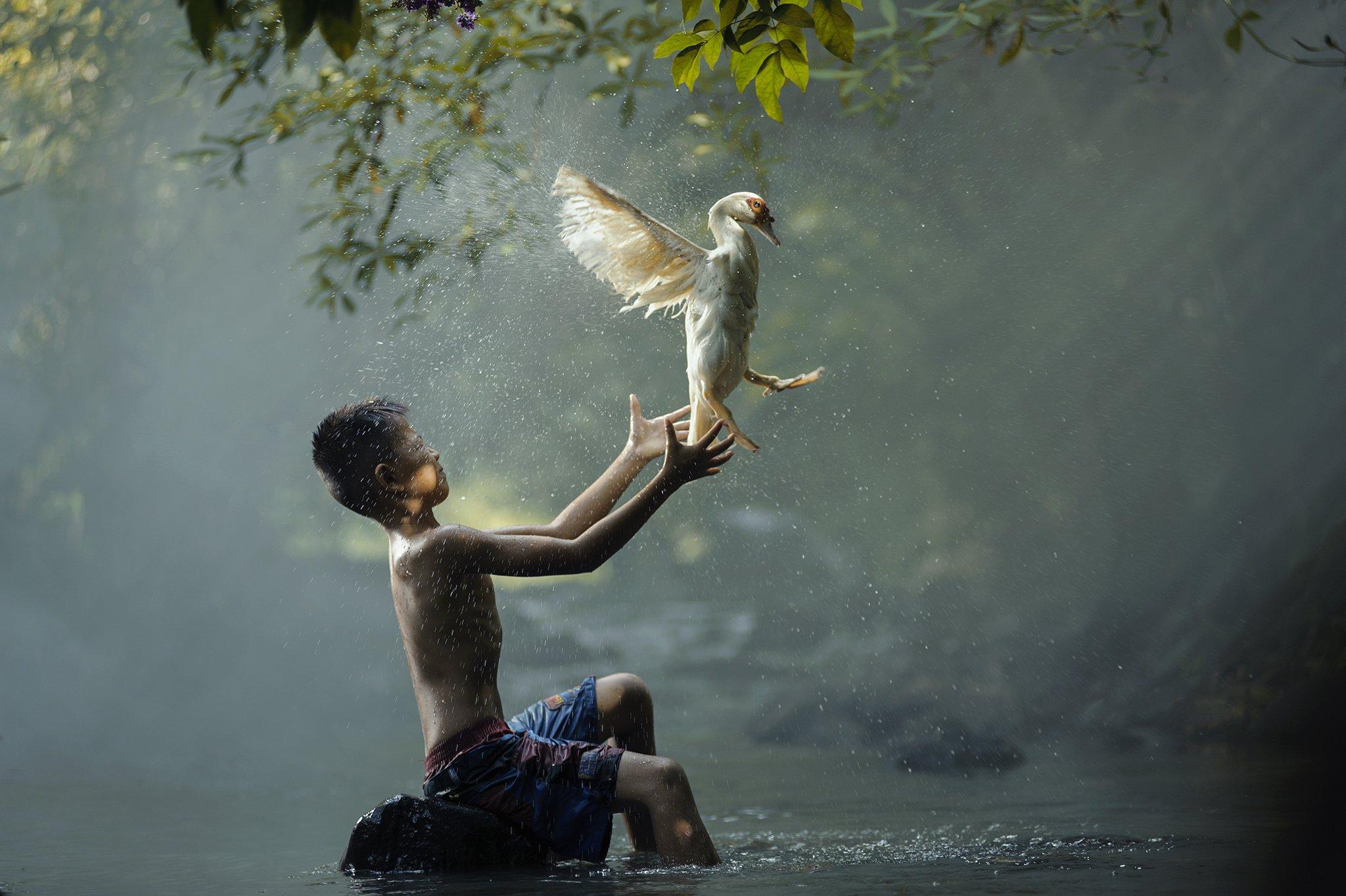 Action, Animals, Asia, Asian, Boy, Child, Children, Duck, Fun, Green, Life, Lucky, River, Water, Waterfall, Wildlife, Saravut Whanset