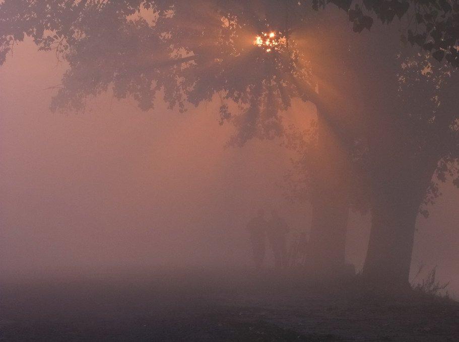 Восход солнца, Деревья, Люди, Пейзаж, Рассвет, Туман, Утро, Марина Мищенко