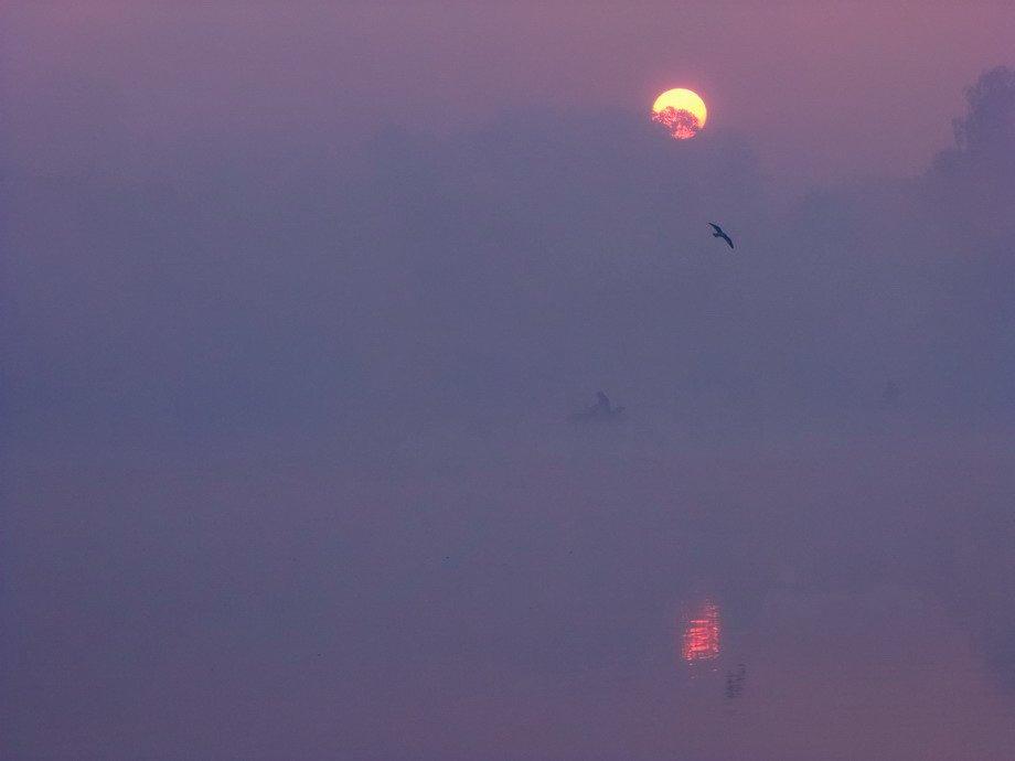 Вода, Восход солнца, Озеро, Пейзаж, Птицы, Туман, Утро, Марина Мищенко