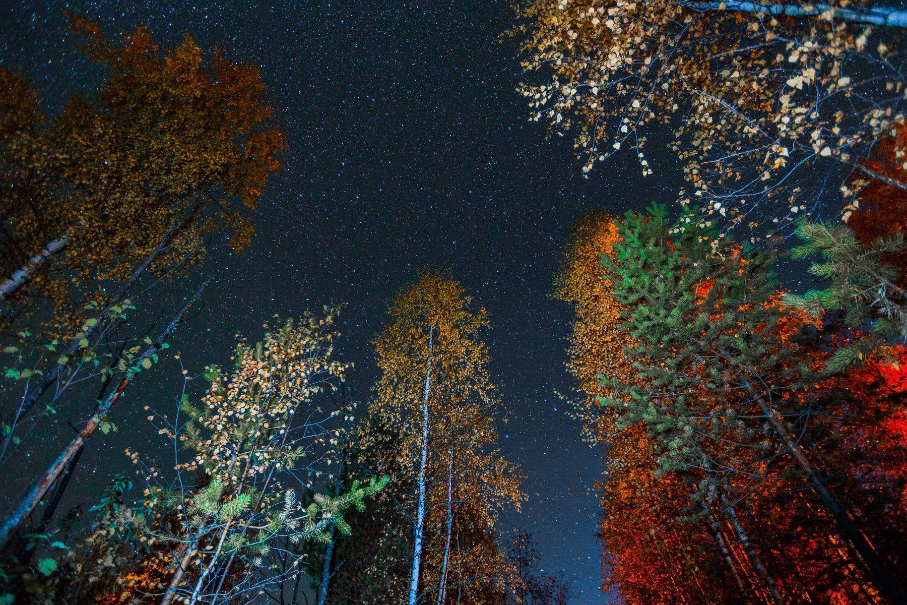 звёзды ночь астрономия вечер осень, Константин Миронов