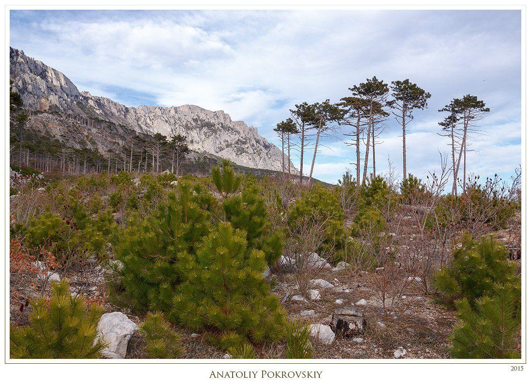 анатолий покровский, весна, горы, камни, крым, облака, сосны, Анатолий Покровский