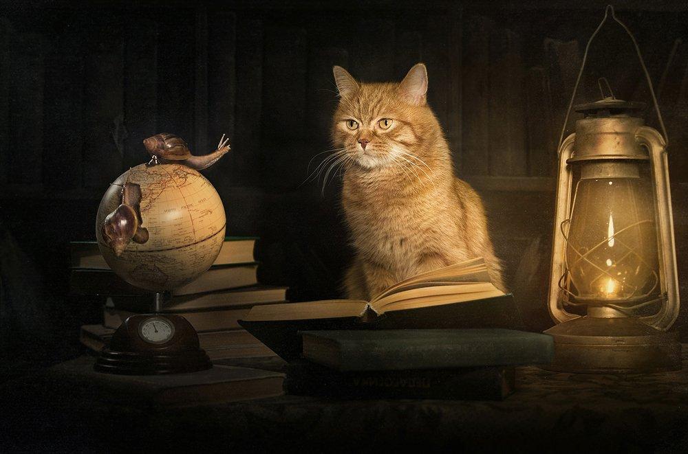 рыжий, кот, улитки, библиотека, книги, глобус, Ярунин Олег