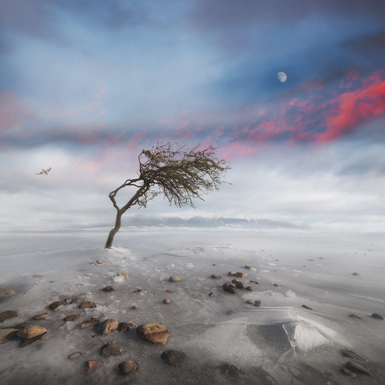 Conceptual, Landscape, Moon, Story, Martin Marcisovsky
