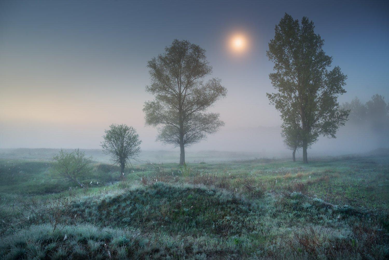 ночь, утро, луна, луг, Солоницевка, туман, сумерки, Александр Киценко
