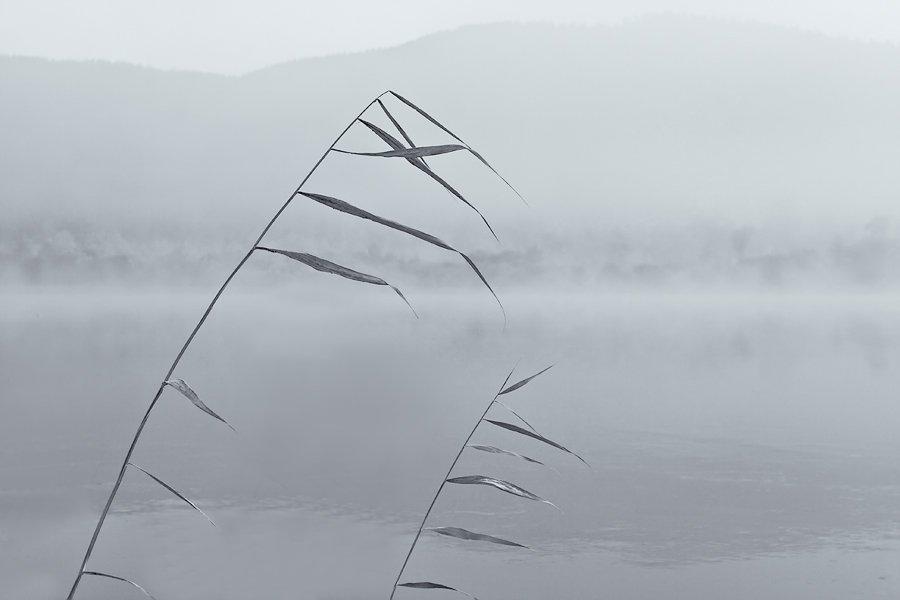 бурятия, река, баргузин, туман, Олег Шубаров