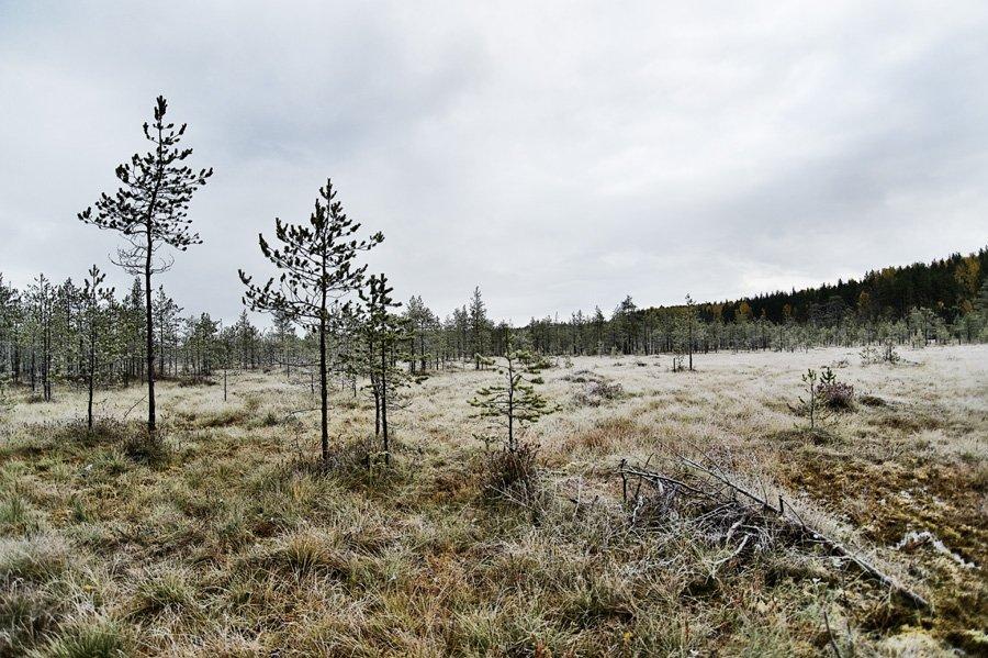 осень,иней,природа,болото,облака,, Евгений Пугачев.