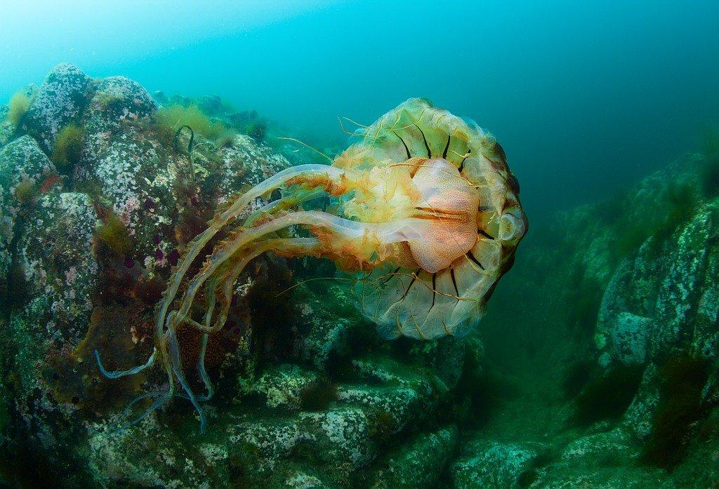 медуза, Россия, Курилы, Кунашир, Столбы, Нарчук Андрей