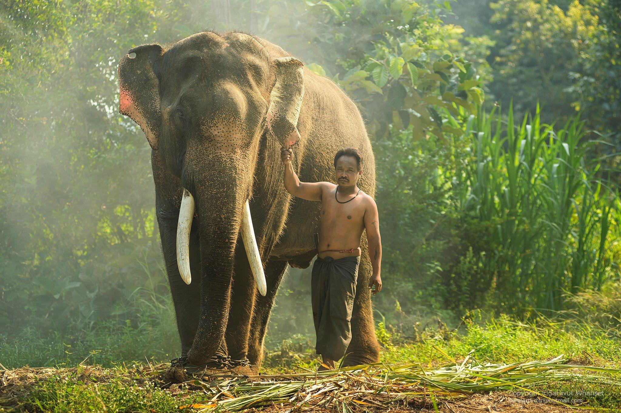 Animals, Asia, Asian, Culture, Elephant, Green, Journey, People, Photo, Photography, Thai, Thailand, Tour, Touring, Travel, Saravut Whanset