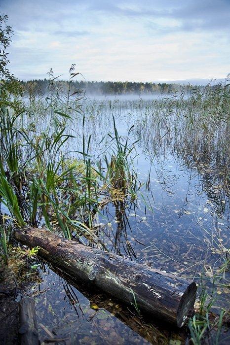 туман,облака,вода,осока,рябь,лес,природа,коряга ил бревно,хз, Евгений Пугачев.