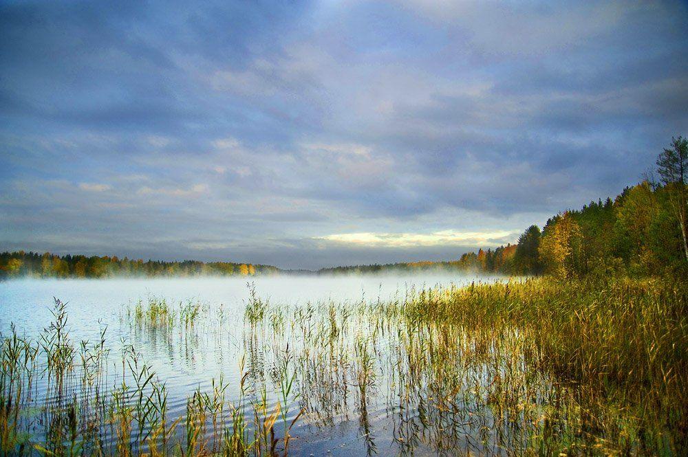 туман,облака,вода,осока,лес,природа, Евгений Пугачев.