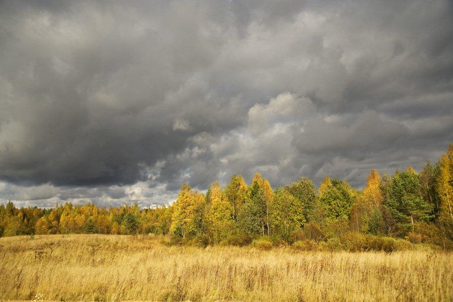 осень,природа,облака,небо,поля,лес,свет,тень, Евгений Пугачев.