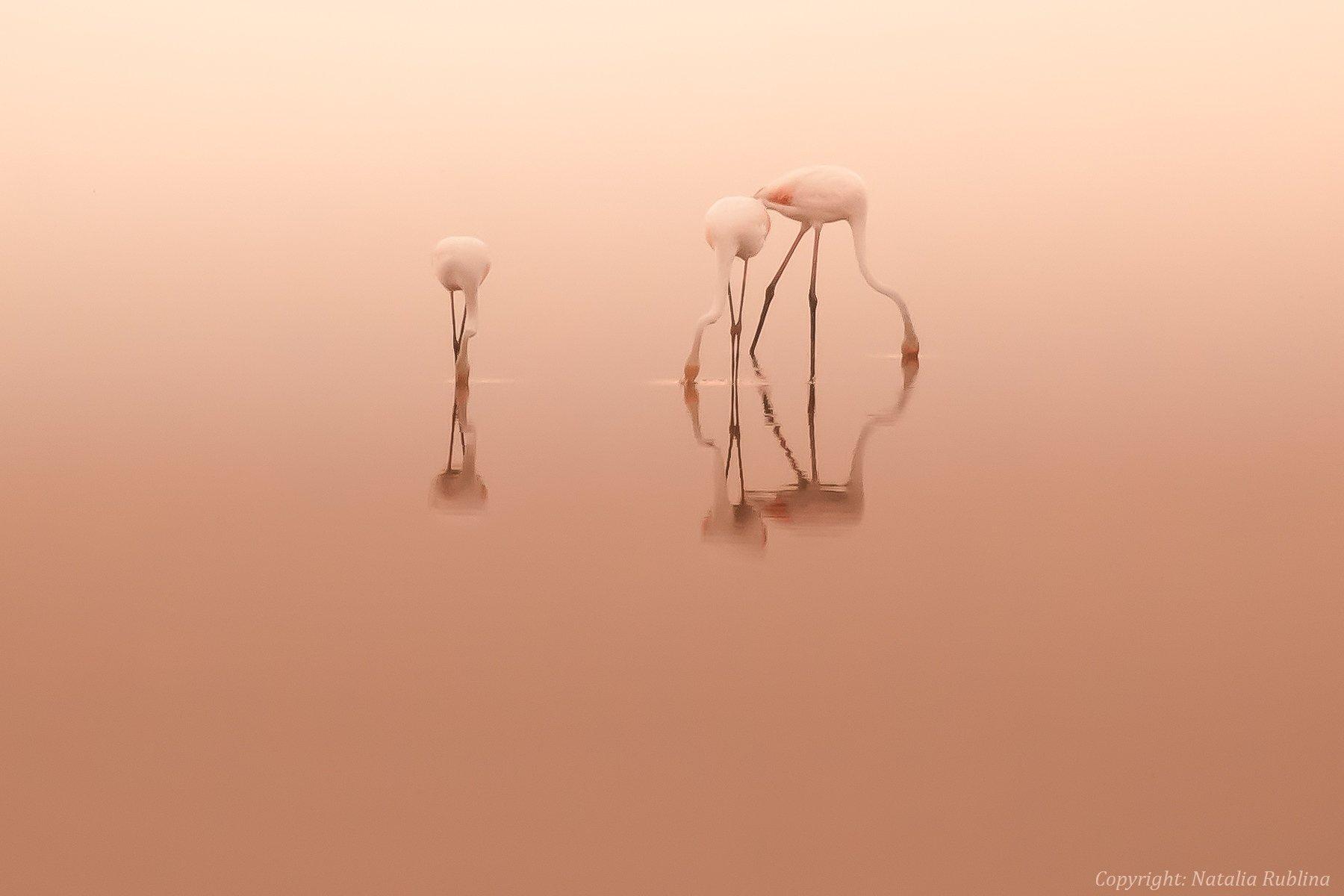 безмятежность, дитя заката, дитя рассвета, заповедник, настроение, озеро, отражения, природа, птицы, рассвет, розовый, спокойствие, тишина, трио, утро, фламинго, Наталья Рублина