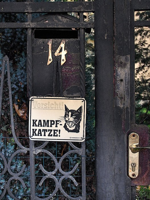 кошка, дом, улица, Maria V. Gorskaya