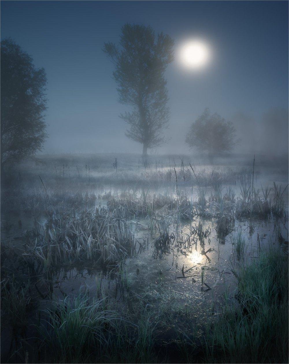 болото, камыш, луна, ночь, туман, Александр Киценко
