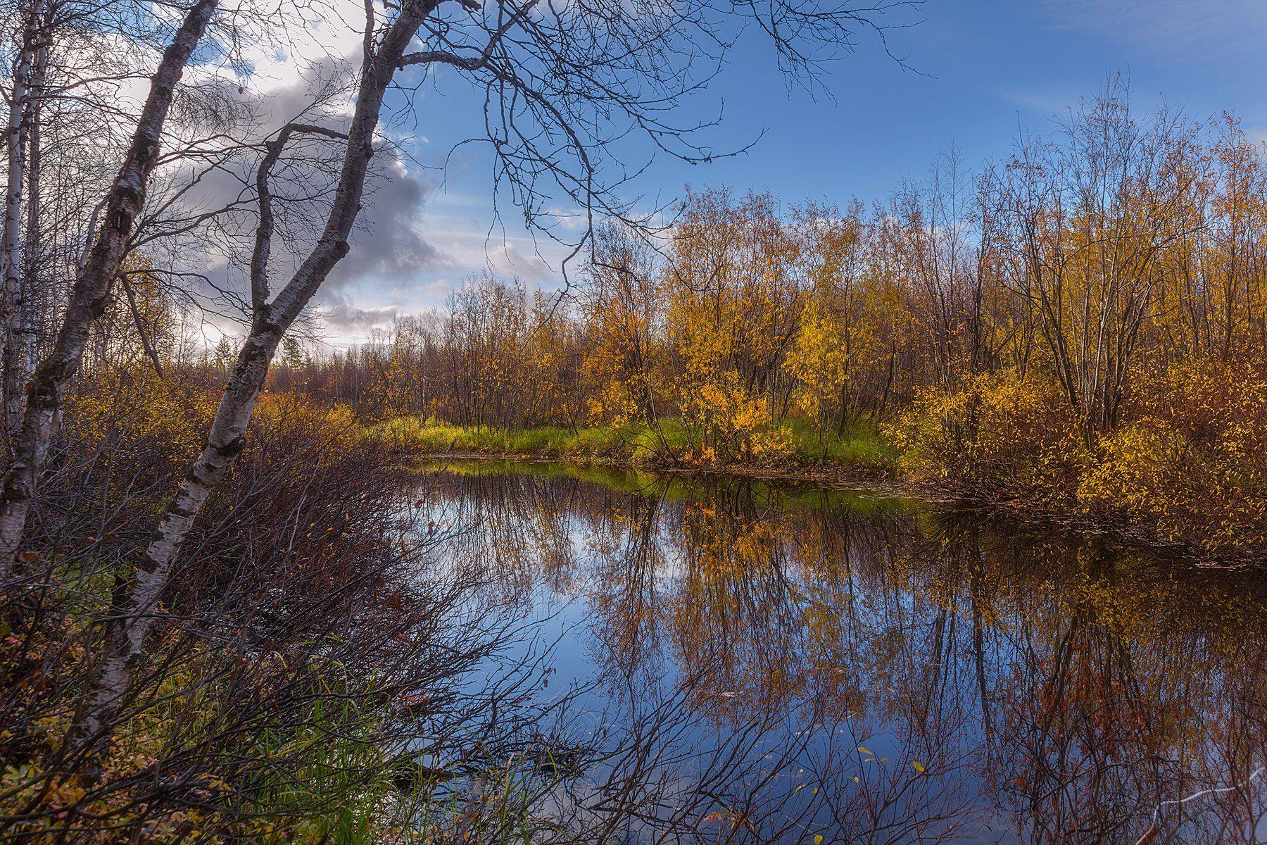 Золото, Осень, Рыбалка, Сентябрь, Ямал, Pavel  Evgrafov