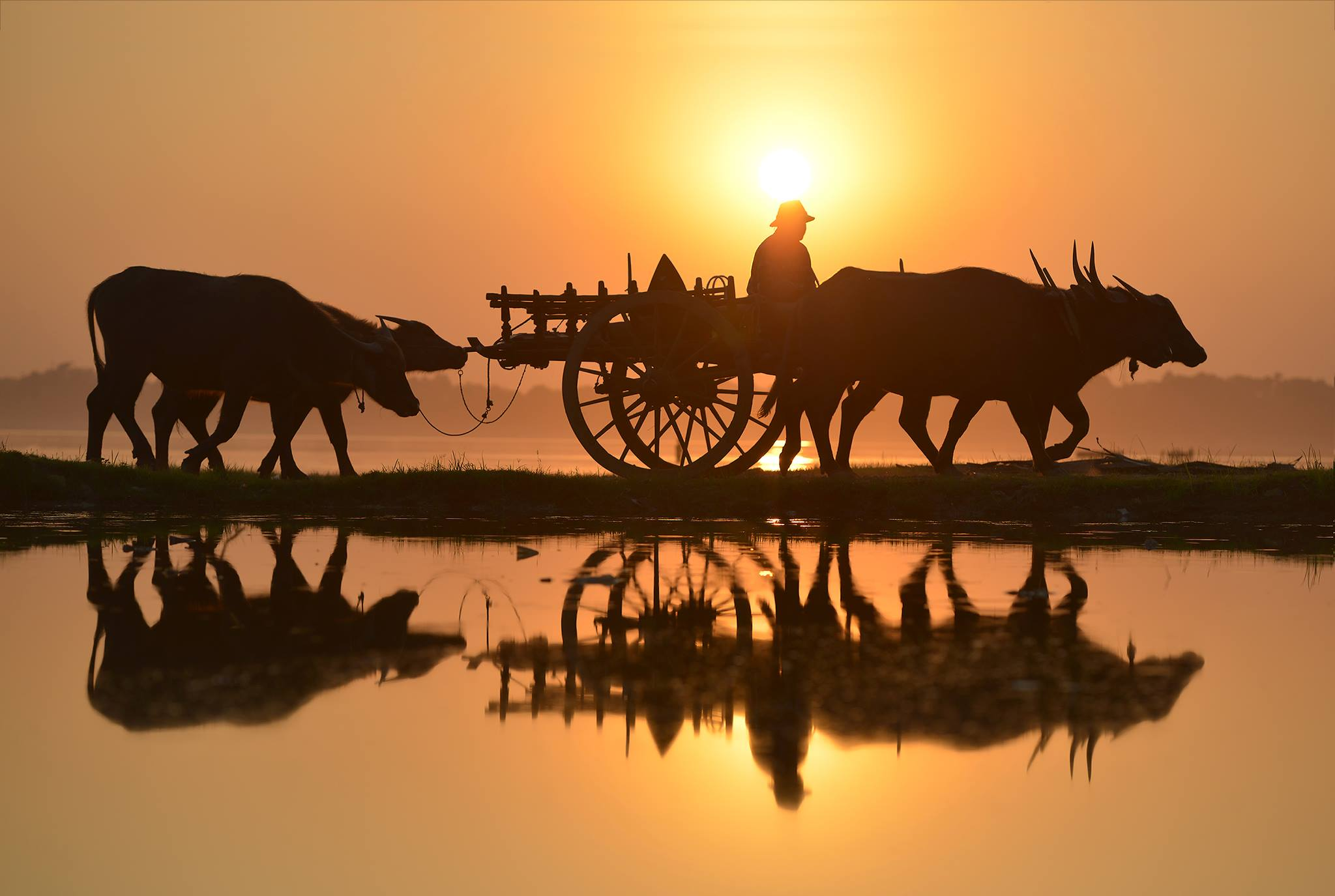 Myanmar ,Southeast,Animal, sarawut intarob