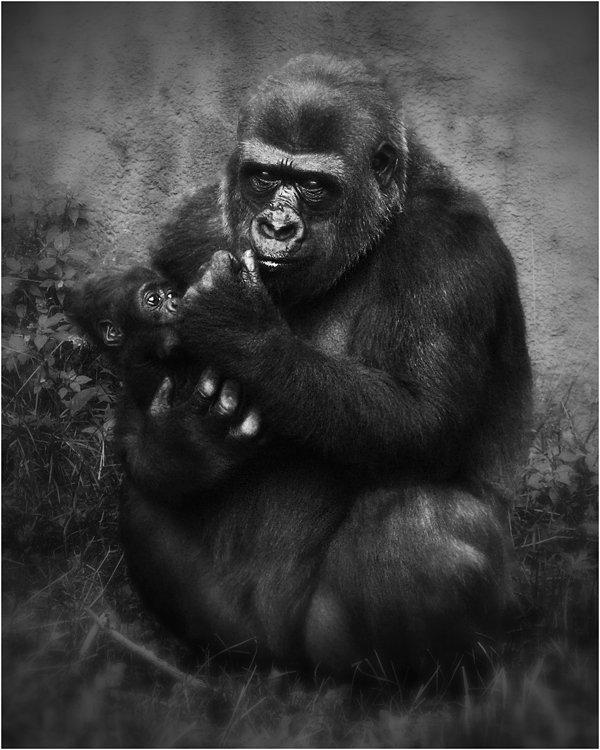 грустно, обезьяны, взгляд, московский зоопарк, Olga Panteleeva