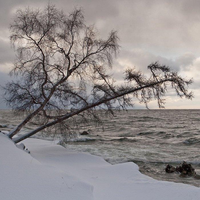 бурятия, байкал, турка, снег, дерево, берег, Олег Шубаров