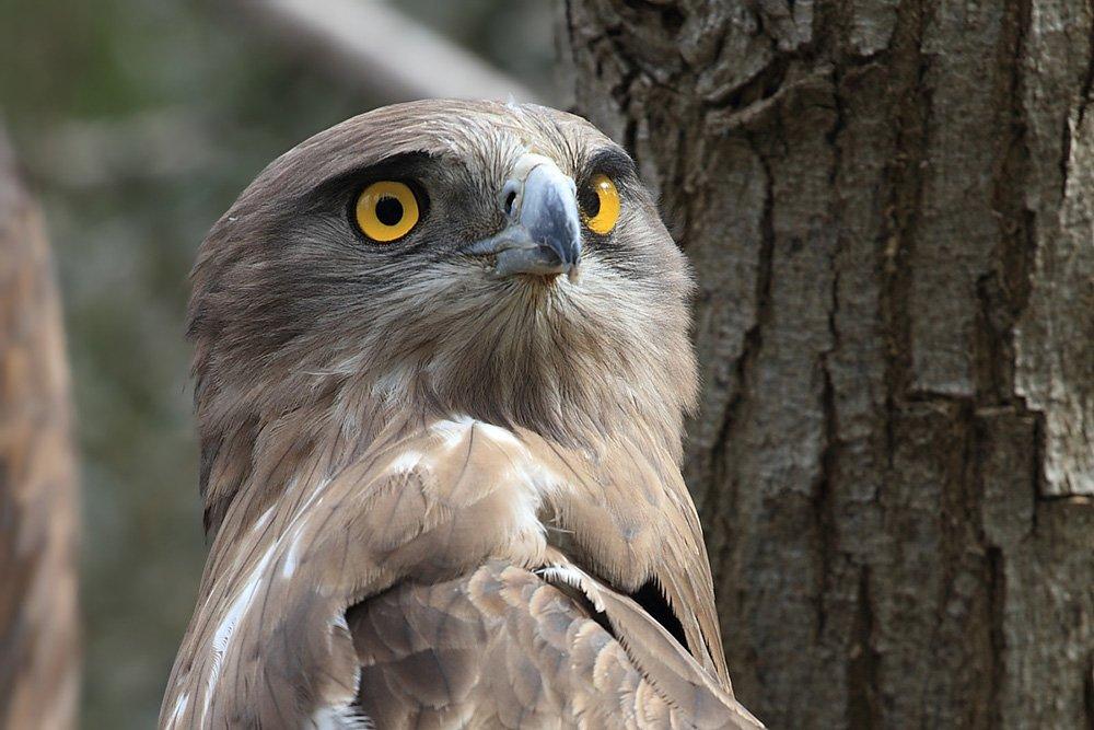 animals,birds,eagle,животные,птицы,орёл  , Yuri Gomelsky