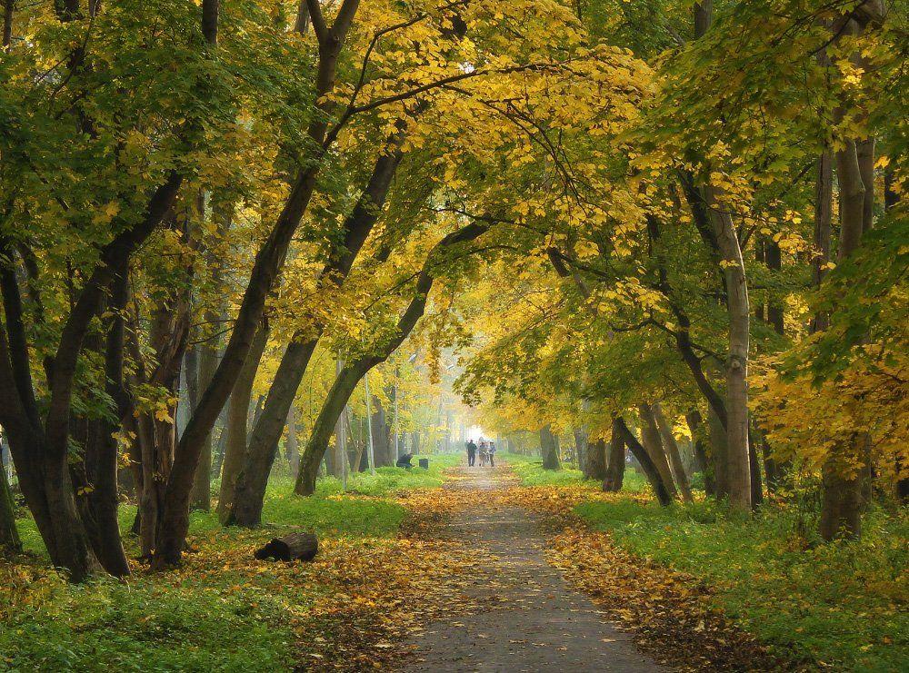 осень, парк, деревья, листья, дорожка, White
