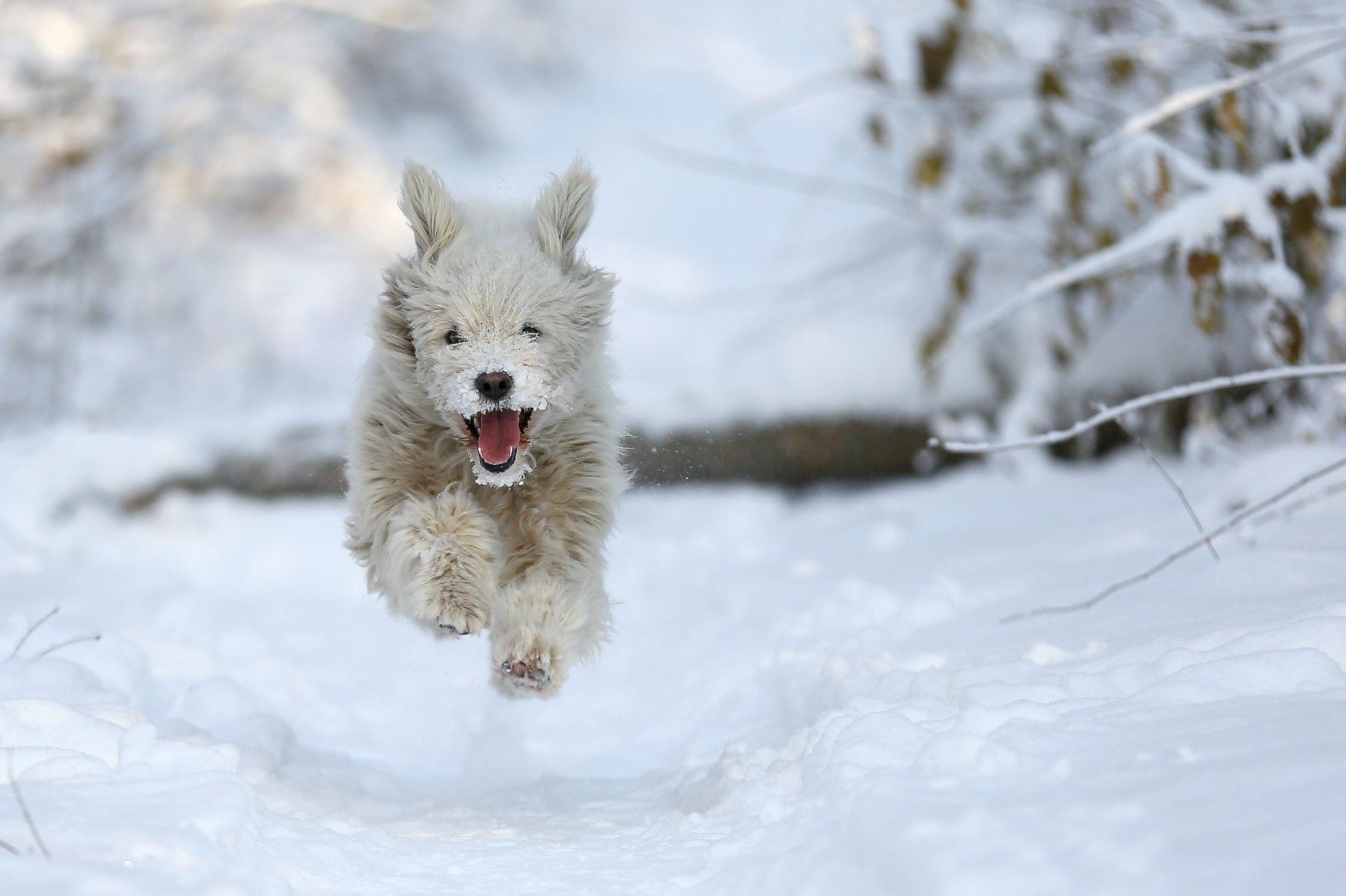 #dog, #nature, #snow, #winter, #зима, #снег, #собака, #эмоции, Константин Слободчук