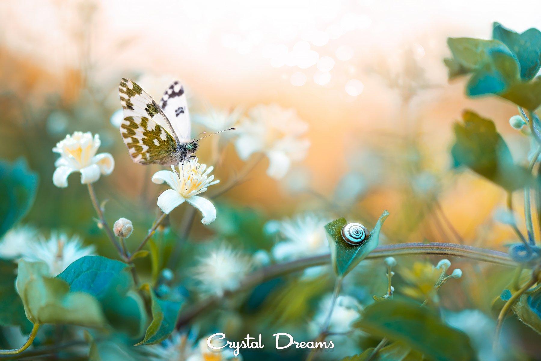 Art, Autumn, Butterfly, Color, Crystal Deams, Macro, Nature, Snail, Sunset, Крылова Татьяна