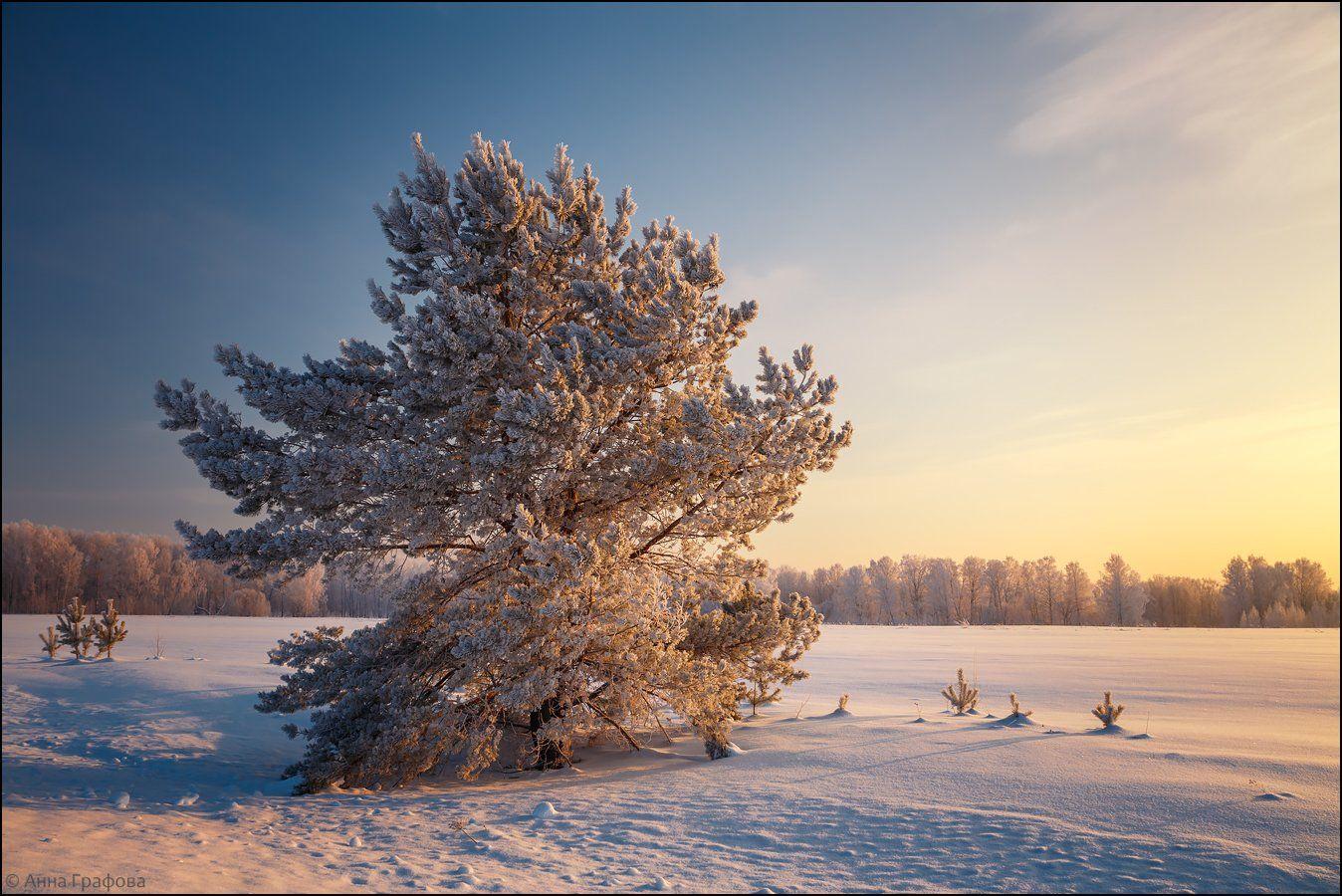 аня графова, мороз, нсо, утро, Аня Графова