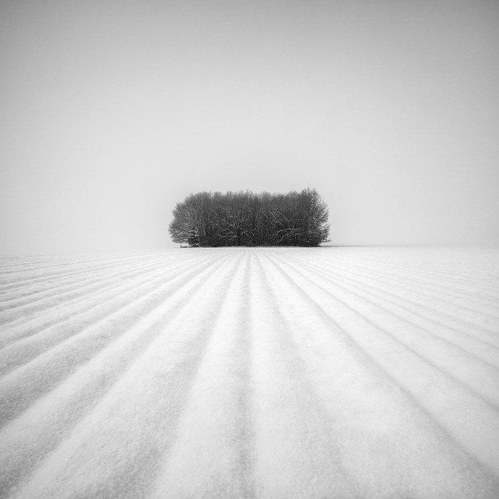 Black and white, Grove, Lines, Minimalism, Snow, Snowscape, Trees, Winter, Martin Rak