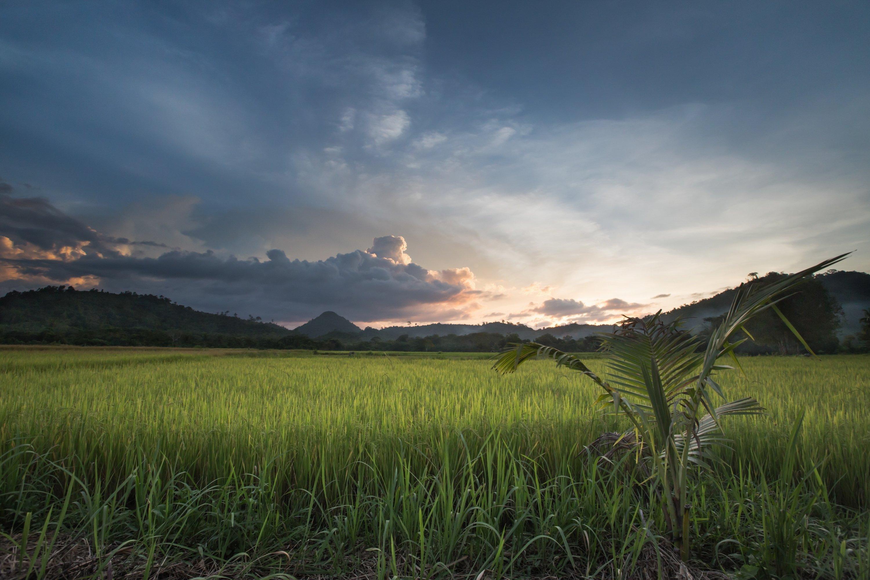 Филиппниы, закат, рисовое поле, Виктор Зайцев