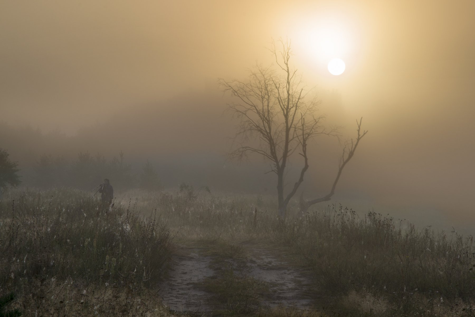 landscape, nature, river, russia, summer, sunset, лето, пейзаж, природа, рассвет, река, россия, смоленская область, солнце, туман, угра, Денис Щербак