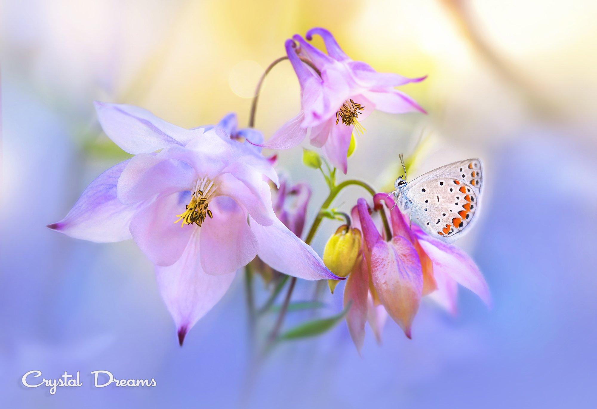 Art, Butterfly, Crystal Deams, Day, In color, Light, Macro, Nature, Tatiana Krylova, Крылова Татьяна