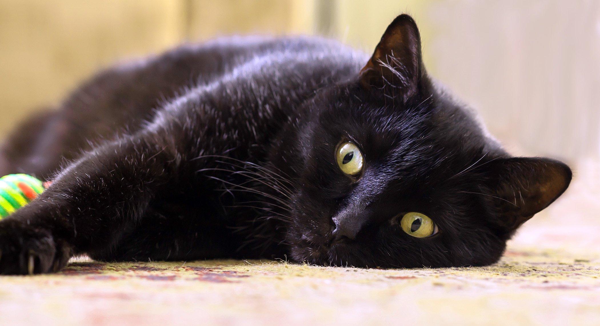 взгляд, глаза, животные, кошки, любимцы, питомцы, Антонина