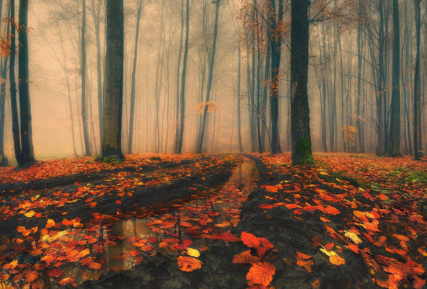 дорога, лес, листопад, осень, туман, Владимир
